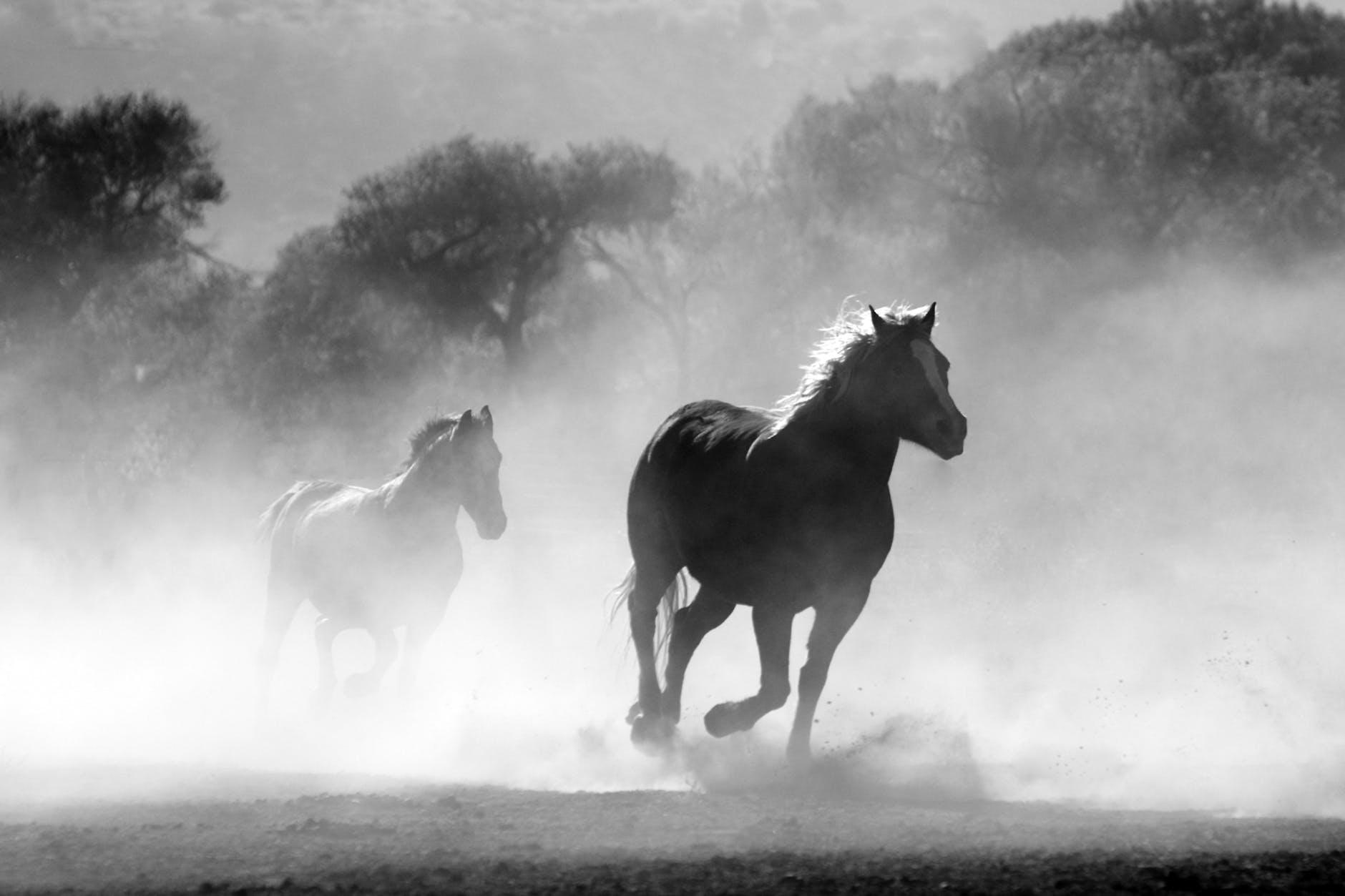 Apakah Workaholic itu kuda